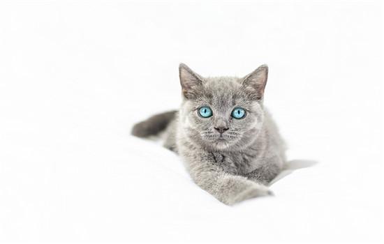 橘猫为什么胖很凶 十只橘猫九只胖