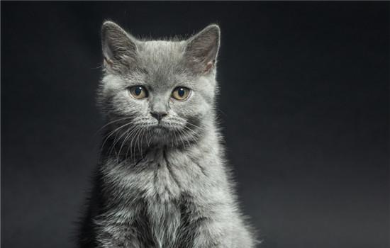 橘猫为什么能吃鱼刺 猫咪的舌头上有倒刺