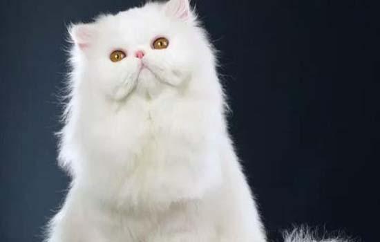 橘猫为什么一直在吃这么能吃 橘猫为什么食量那么大