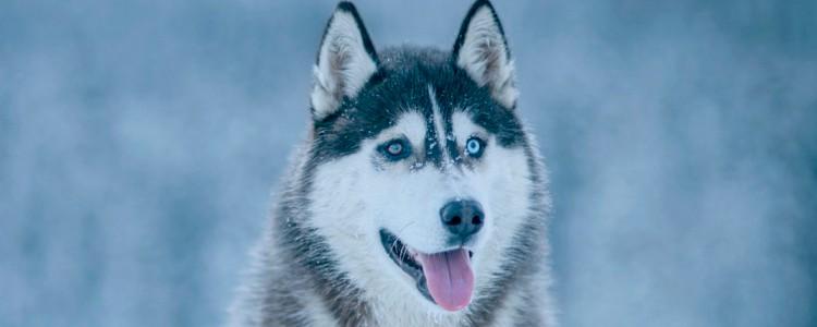 狗狗怕冷吗 狗狗会害怕寒冷吗