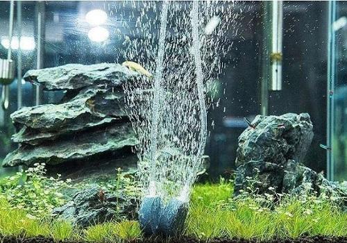 鱼缸缺氧怎么办 解决鱼缸缺氧的方法