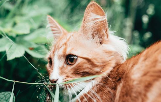 猫的尾巴竖起来是为什么 猫的尾巴竖起来代表什么意思插图(1)