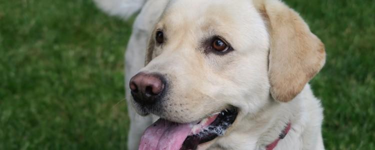 狗狗怀孕后怎么喂养比较好 狗狗怀孕后怎么喂养