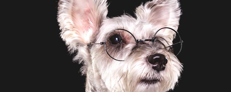体型小的狗 体型小的狗有哪些