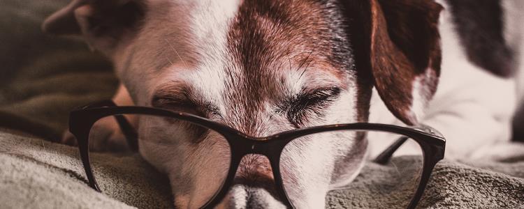 狗狗兴奋的表现 狗狗兴奋的样子