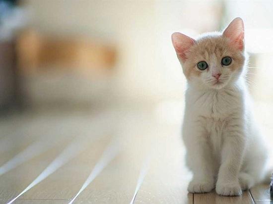 猫咪快速止泻的方法 怎么让猫咪快速止泻