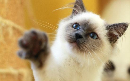 猫肚子胀气会死掉吗 猫肚子胀气不会死