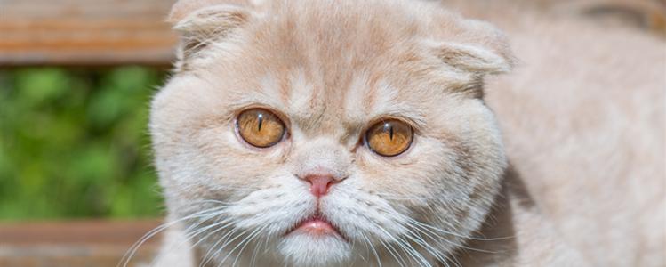 风油精驱猫有用吗 风油精可以驱猫吗