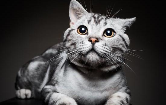 猫吃骨头卡住了的症状 猫被骨头卡住的症状