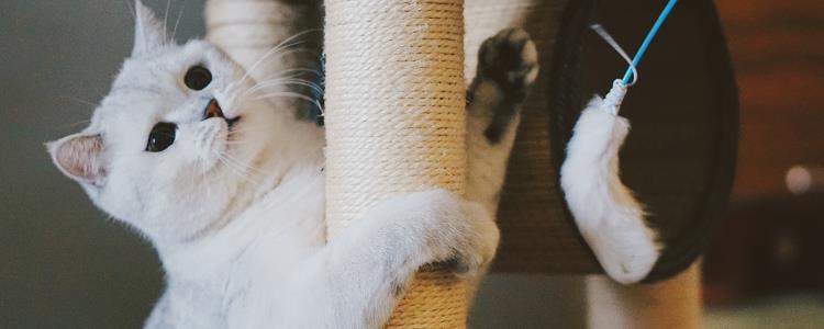 猫咪笼养有什么不好 猫笼养的坏处