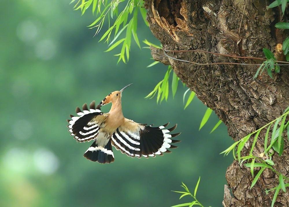 山和尚鸟吃什么 山和尚鸟怎么喂养