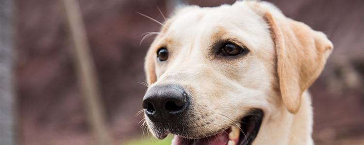 狗狗频繁伸懒腰伸后腿 狗狗频繁伸懒腰伸后腿怎么回事