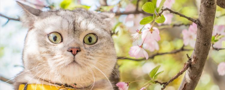 猫闹春怎么快速制止 怎么减轻猫闹春