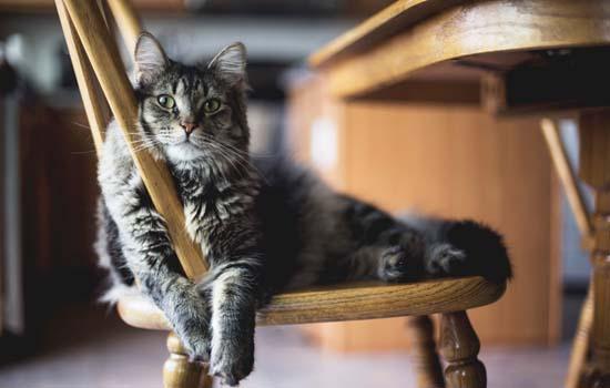 猫咪感染肺炎有什么症状 猫咪感染肺炎的症状