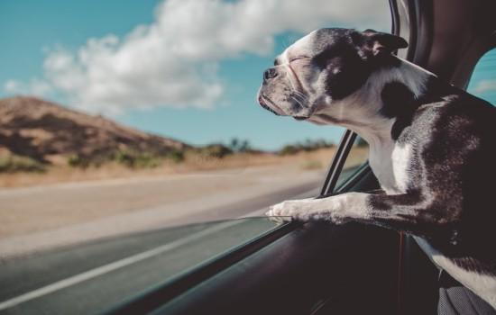 高速公路上狗会检查狗证吗 现在高速公路上会不会查狗