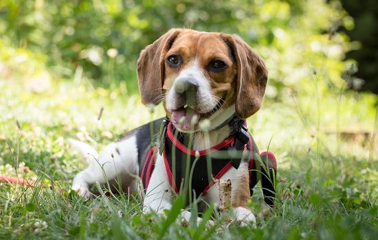 小狗藏身上能过安检么 小狗藏身上能过高铁安检么