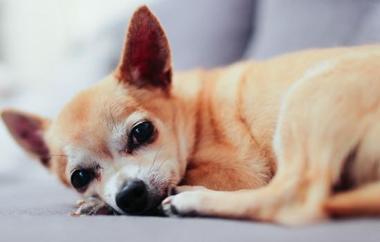 狗狗死后眼睛不合上张着嘴 狗狗死后眼睛不合上有血丝