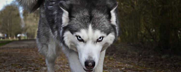 狗狗斜着走路是有病吗 狗狗斜着跑