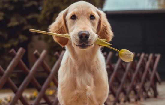 电影宠爱里的狗狗品种 宠爱里的狗狗都是什么品种