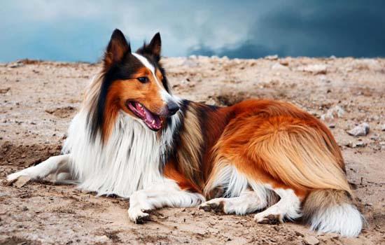 狗咬自己的爪子是怎么回事 狗为什么咬自己的爪子