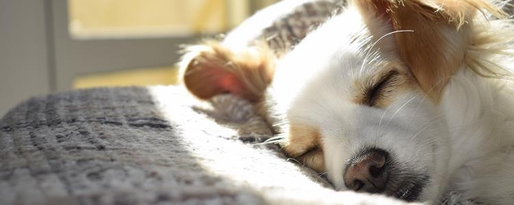 狗狗几个月算成犬 狗狗几个月算成年犬
