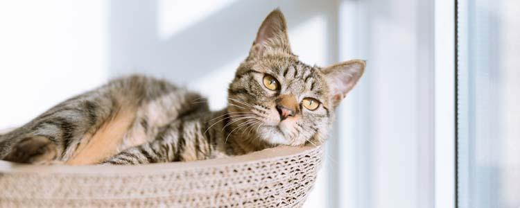 猫眼睛上面的毛稀疏是为什么