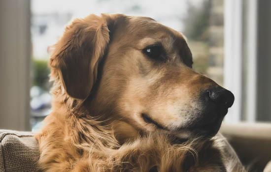 狗狗肚子胀很大,怎么办呢