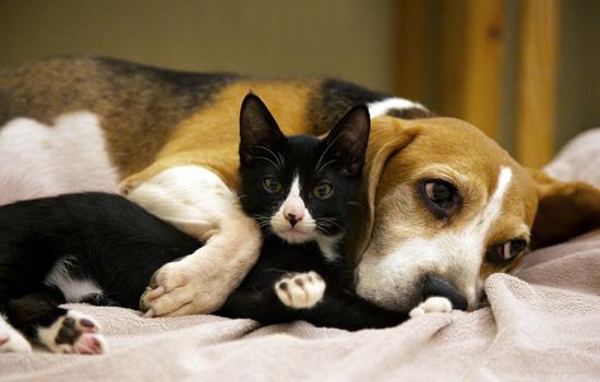 狗的品种有多少种 全球狗的品种有多少种