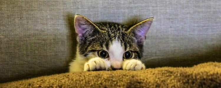 猫心情不好怎么办 感觉猫心情很不好怎么办
