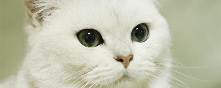 猫开心时候的表现 猫开心的时候有什么表现
