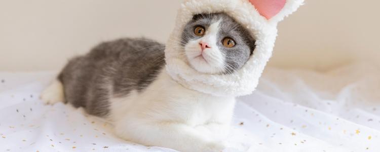 猫开心的时候尾巴是什么样的 猫的尾巴代表猫的心情
