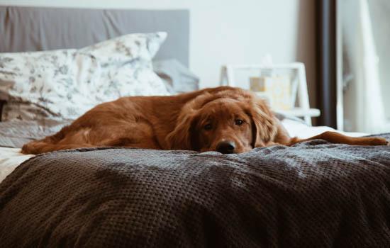 狗狗大便软粘地怎么回事 狗狗大便软粘地的原因