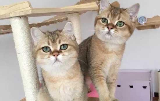 为什么猫一窝挑最大的 这样去挑选一只健康的猫咪