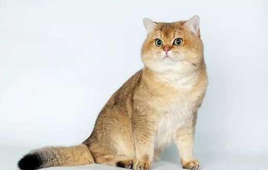 怎么测试猫对你的信任 怎么知道猫是否信任你