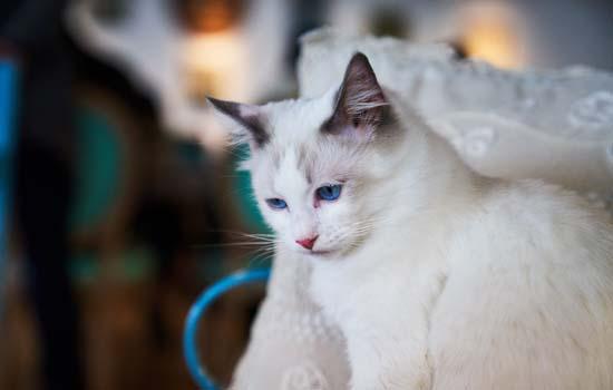 得狂犬病的猫什么样子 得狂犬病的猫什么症状