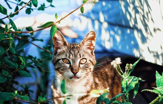 小猫第一次到家怎么办呢 第一次养猫小猫刚到家怎么办