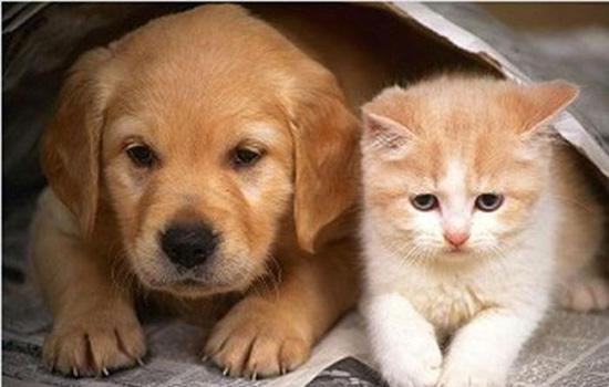 猫和狗能生孩子吗 猫和狗能不能生孩子