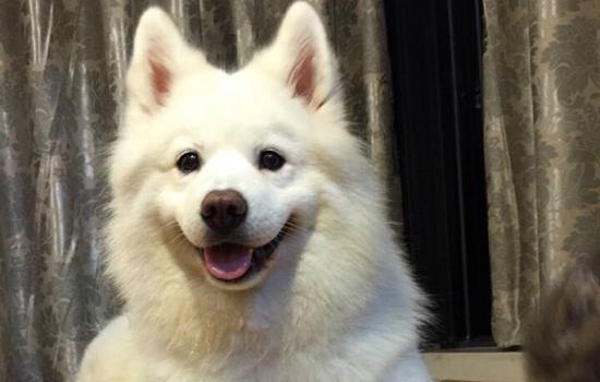狗的智商相当于人的几岁 狗脑颅的大小跟智商成正比