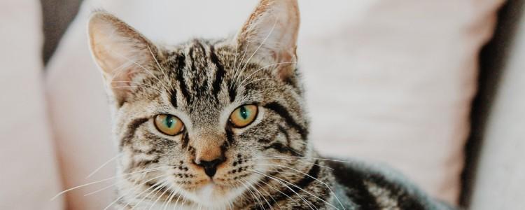 猫咪发烧的症状表现 猫咪发烧会表现呼吸急促吗