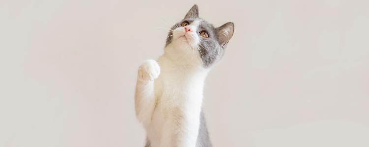 猫会抑郁的症状 猫抑郁了什么症状