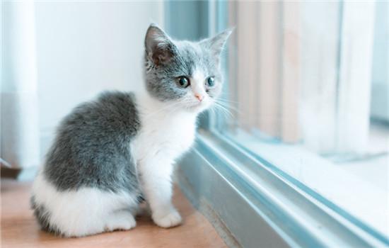 猫咪多大可以断奶送人