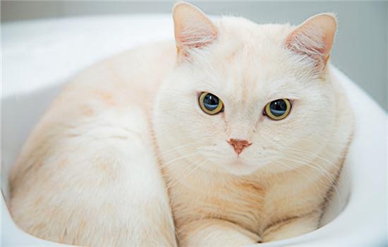 为什么小猫总打喷嚏 为什么小猫总是打喷嚏