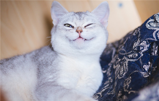 猫眼睛肿了是怎么回事 猫眼睛肿了是怎么情况