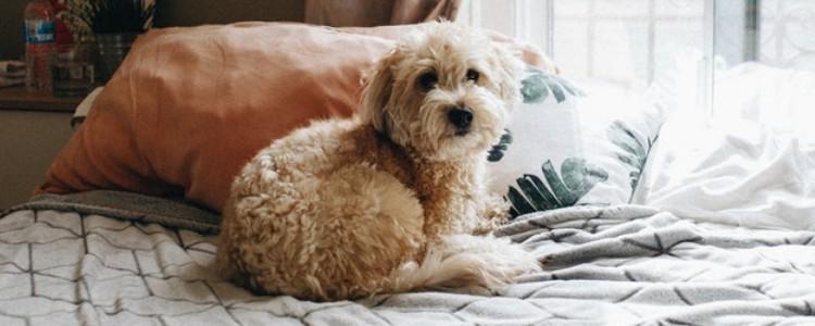 狗狗牙疼的表现 狗狗牙疼的症状