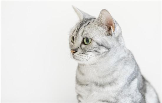 猫身上有螨虫什么症状插图(1)