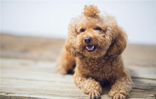 狗狗子宫蓄脓有什么症状 狗狗子宫蓄脓症状