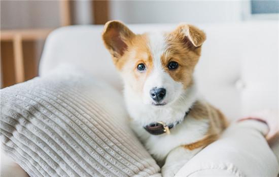 狗狗開空調冷怎么辦 狗狗開空調冷的解決辦法