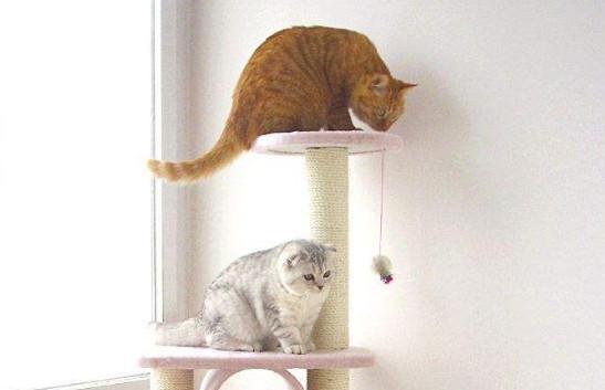猫咪软便和拉稀有什么区别插图(1)