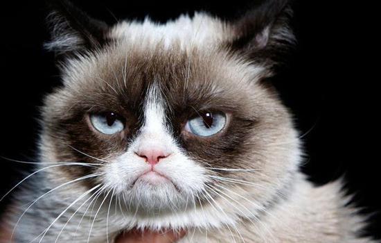 猫咪不让抱怎么办插图(1)