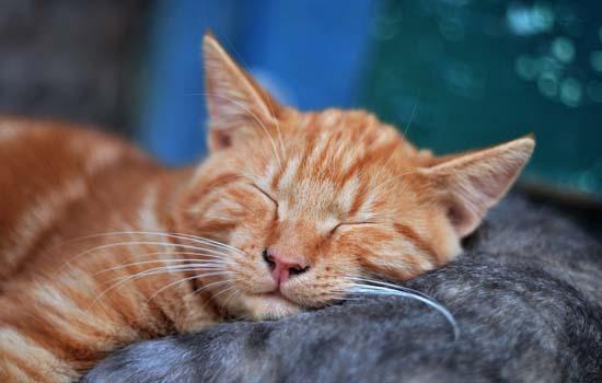 猫睡着了抽搐怎么回事插图(1)